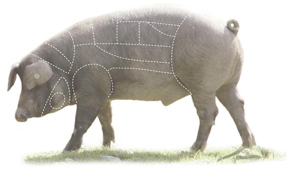 Cerdo triste