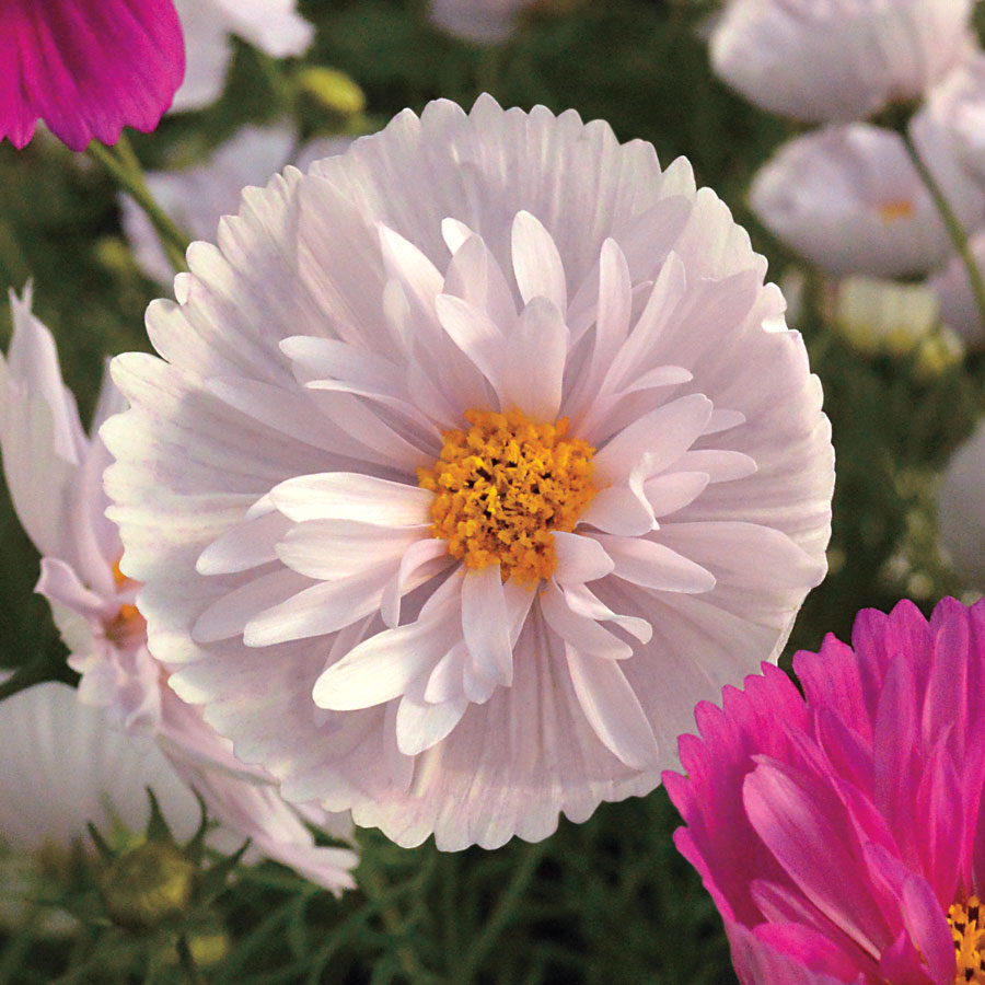 Snazzy Park Seed Y Gardeners Review New 2017 Flower Seeds Official Water Gardening Direct Reviews Direct Gardening Reviews 2016 Gardeners Review New 2017 Flower Seeds Official Blog houzz-03 Direct Gardening Reviews