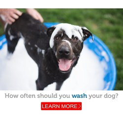 Small Crop Of How Often Should You Wash Your Dog