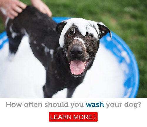 Medium Of How Often Should You Wash Your Dog