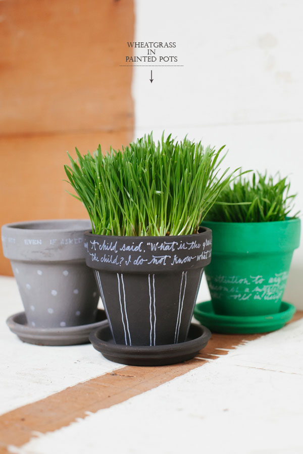 Wheat-Grass-In-Potted-Plants12