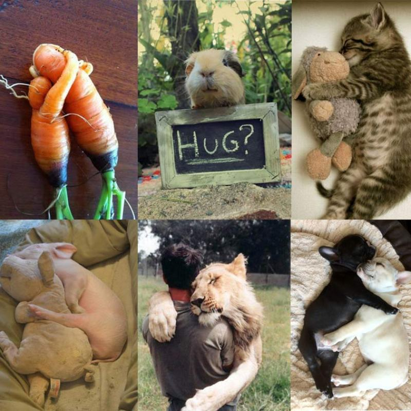NationalHuggingDay-FavoriteHugs