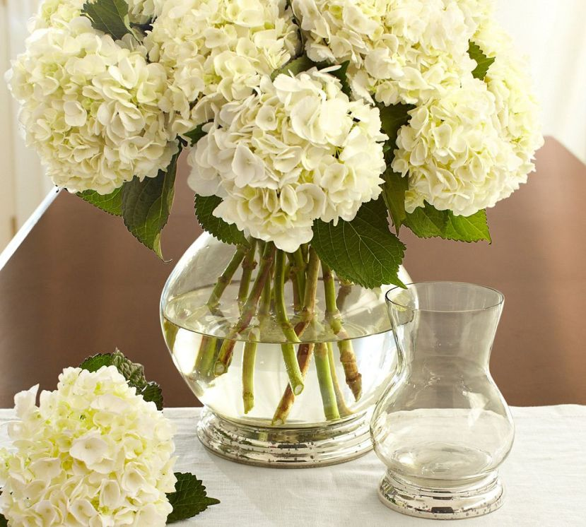 whitehydrangeas