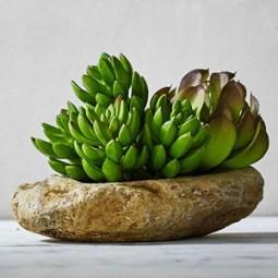 Succulent & Stone Arrangement