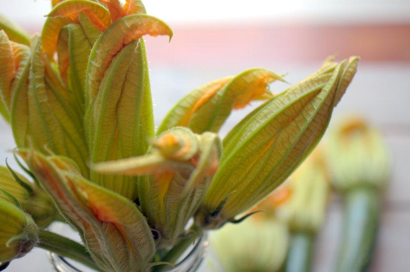 Un bouquet di Fiori di zucca
