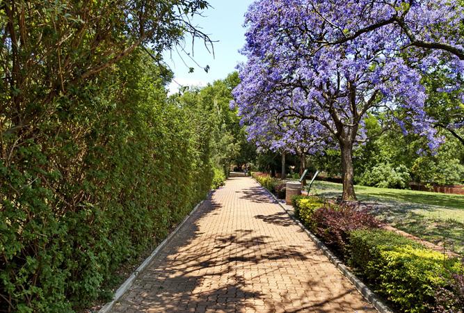 Walkway at Johannesburg Zoo