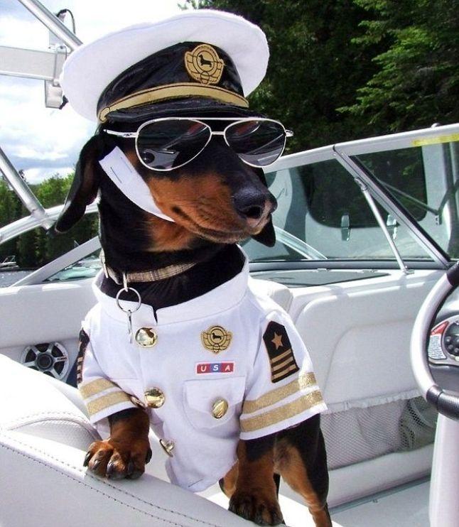 dog sailor mdw blog pic 3