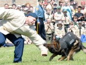 nj-camporee-dog