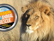 nat-geo-animal-rescue