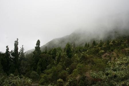 Ile de la Réunion - janvier 2011 - 054