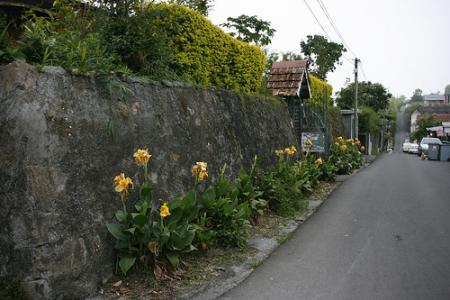 Ile de la Réunion - janvier 2011 - 594