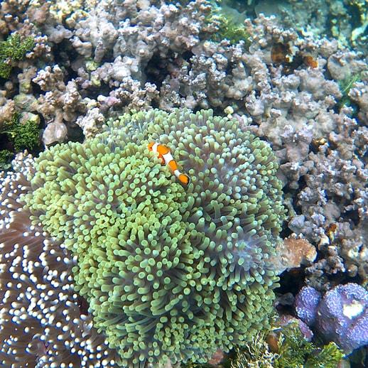 blog sittakarina - Serunya Ajak Anak Snorkeling di Pulau Pahawang (4)