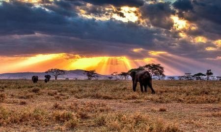 15 Interesting Facts About The Serengeti