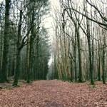 Mullaghreelan woods, Athy