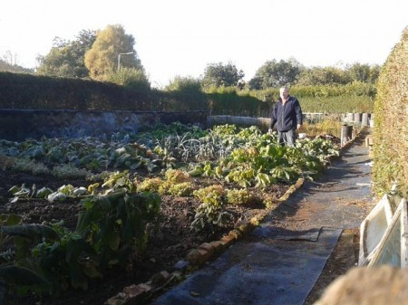 Guest blogger - Steve Woodward - Surveying the damage after the first frost of 2012