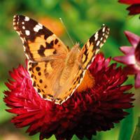 Plants for Wildlife