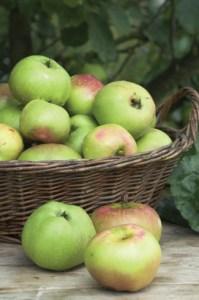 Bramley Apple Pie Week