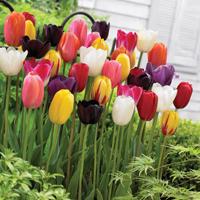 Top 5 gardening trends