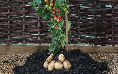 2-in-1 Cropping Vegetables
