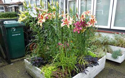 Revamped Front Garden