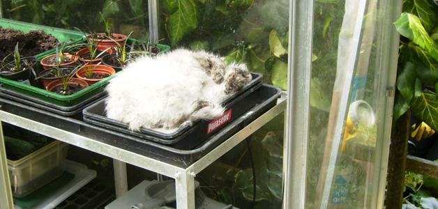 Cat in the propagator!