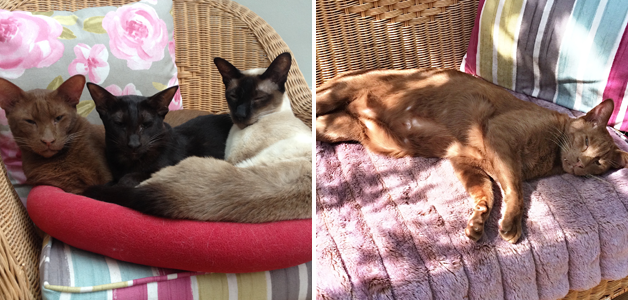 Caroline's cats having a really hard life & Fred doing what Fred does best - nothing!!