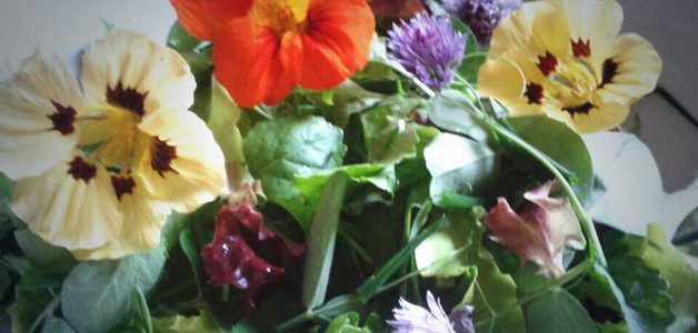 Selection of Katy's flowers from the garden