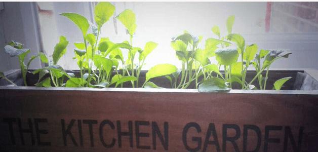 Katy's kitchen garden