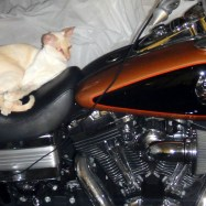 Wiley lounging on my Dyna.