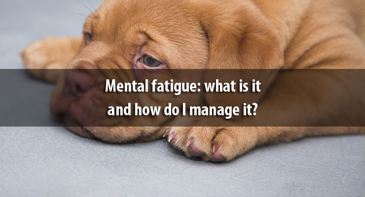 Mental fatigue: what is it and how do I manage it?