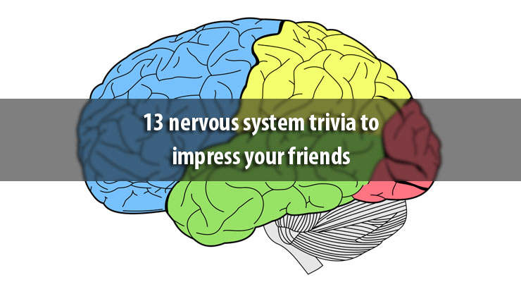 13 nervous system trivia to impress your friends