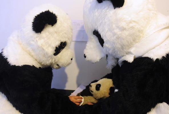 Panda Caretaker wearing Panda Kigurumi