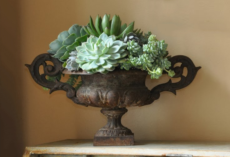 Classic succulents in a classic urn by Luxe Living Interiors, floral arrangement by Thompson Hanson