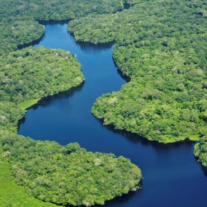 The Rarest Species in the Amazon