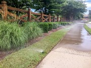 Native Grasses for Lawns and Gardens