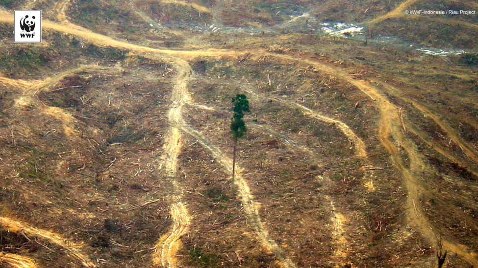 Illegal Logging activities inside Tesso Nilo National Park