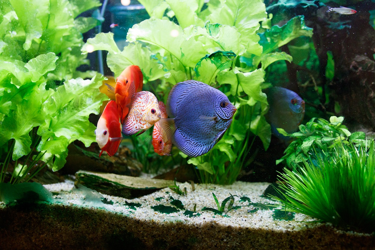 Relaxing Effects Fish Tanks Have On Your Children