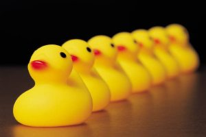 Ducks in a row…..