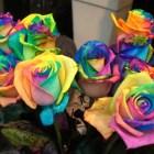 rosas_coloridas (2)