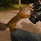 A reação dos animais frente às câmeras