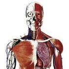 15 fatos sobre seu corpo que talvez você não saiba