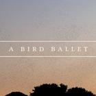 A maravilhosa dança dos pássaros