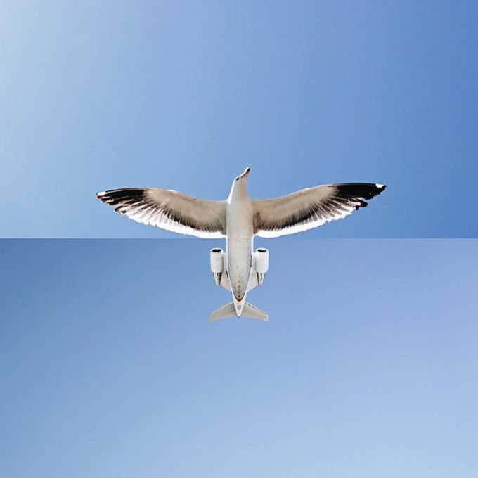 Projeto Fotográfico: ComboPhoto – Combinações engraçadas e inusitadas