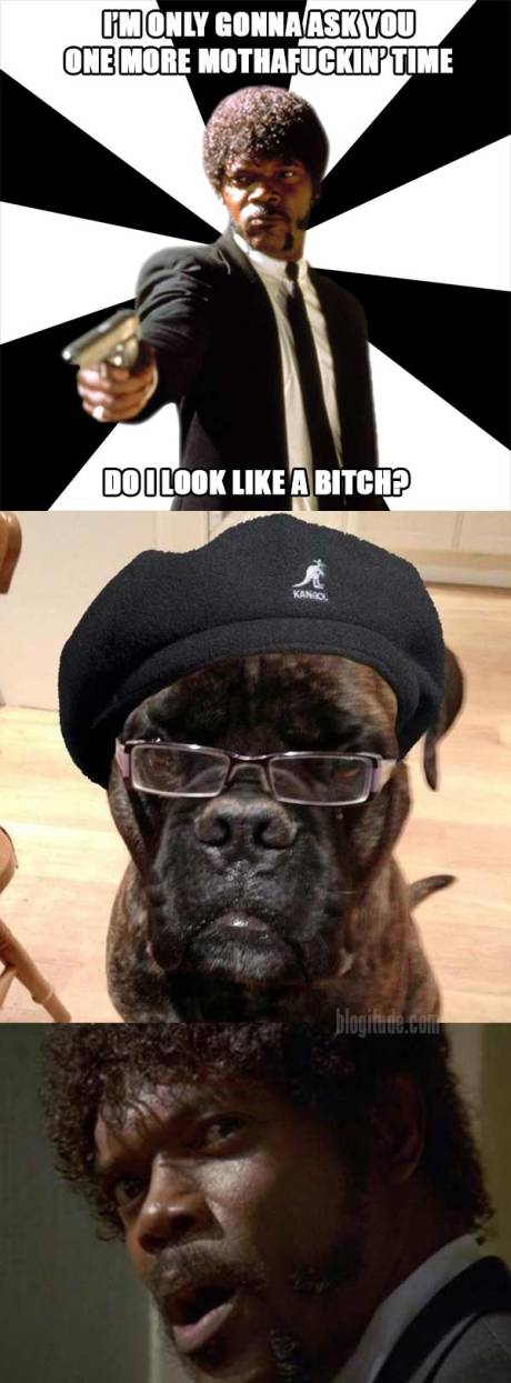 I'm only gonna ask you this one more mothafuckin' time... Do I look like a bitch?  (Samuel L. Dogson)  (WTF?!)