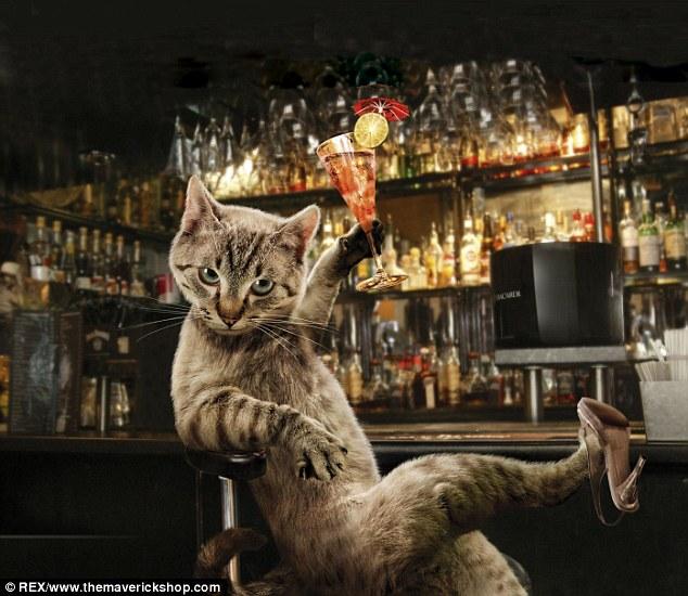 Invités Kapoué n°28: Cat and Cake, bar à chat à Strasbourg