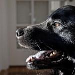 A kutyus nagyon szomorú mikor másokat fogadnak örökbe. De nézze mi történik, mikor érte jönnek!