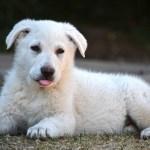 Azt mondta a kutyának, hogy eljött az orvosság beadásának ideje: a reakciója felbescsülhetetlen!