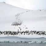 Pingvinóriás maradványai