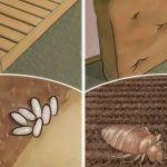 EZ SZÖRNYŰ! Tudtad, hogy az ágyad tele van láthatatlan élősködőkkel? Így öld meg őket…