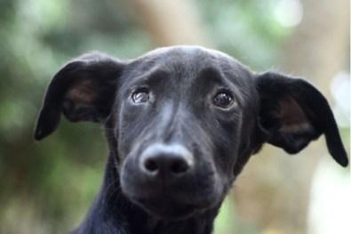 Dia nacional de adotar um animal